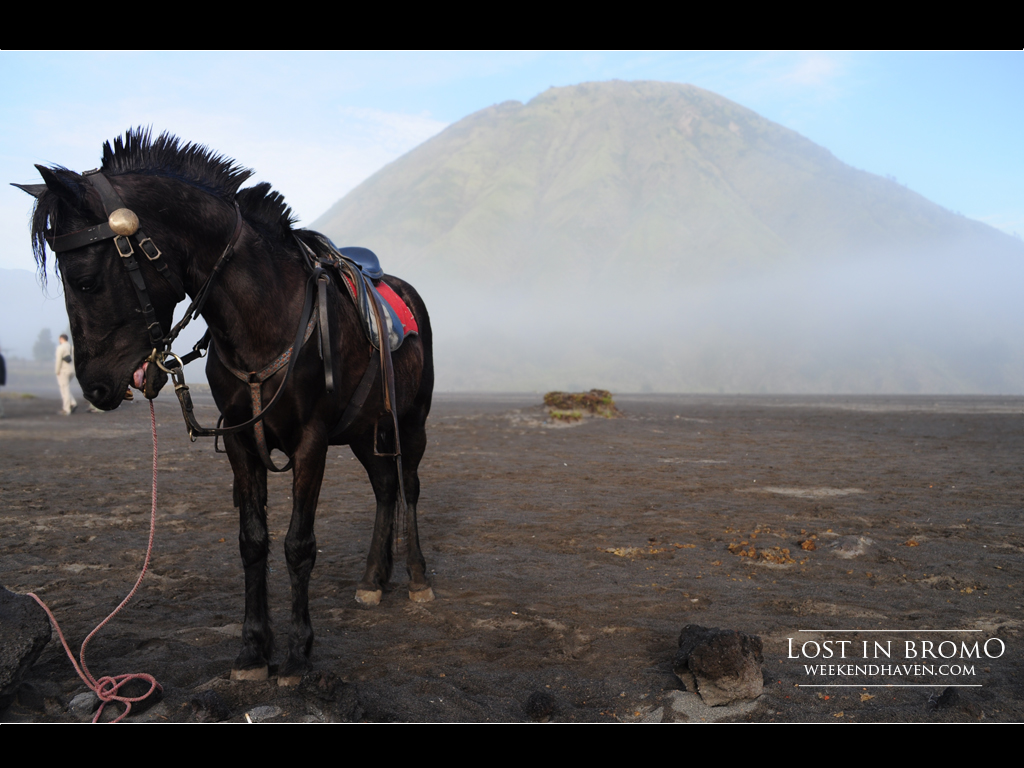 Dark Horse at Mount Bromo