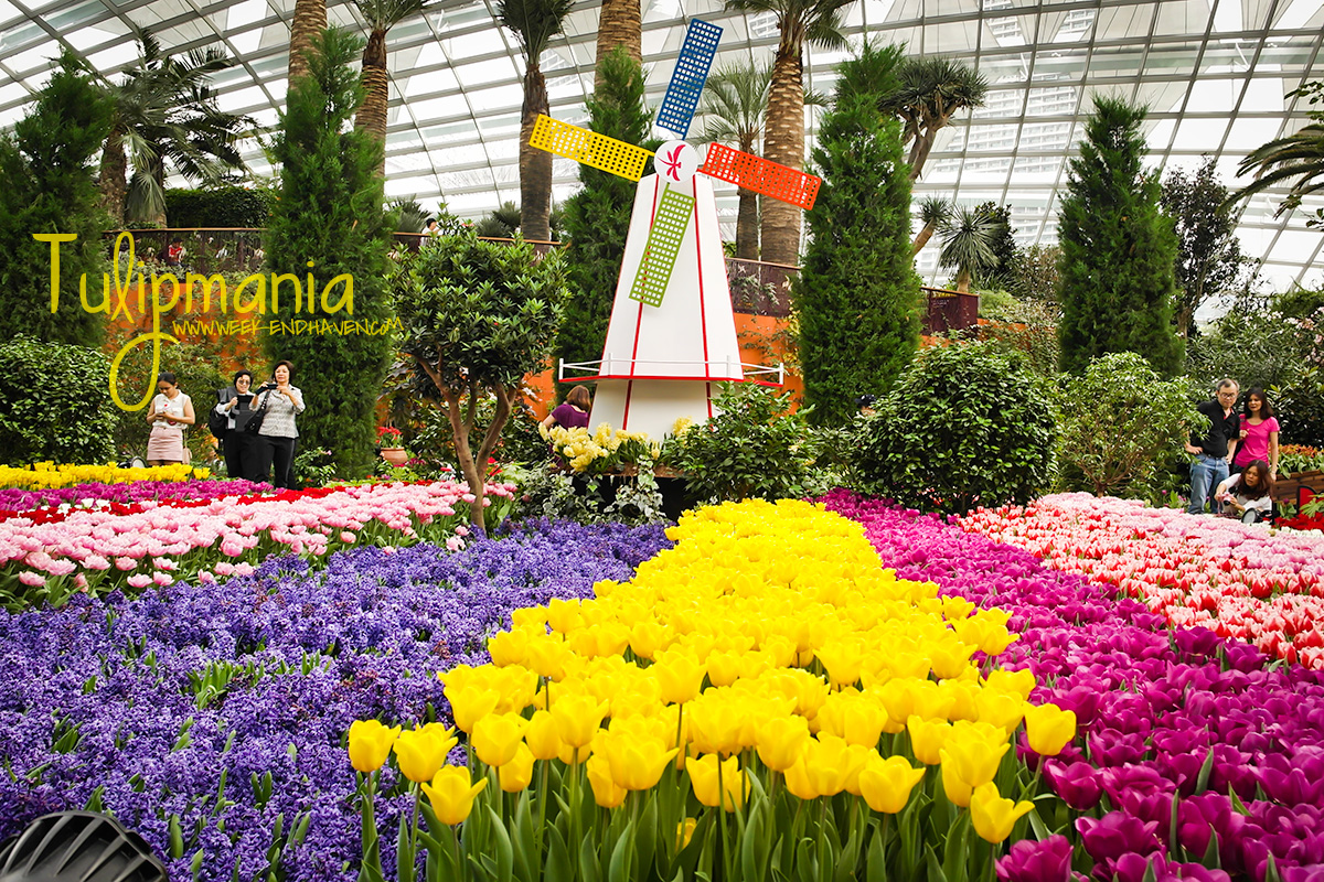 tulip beds at gardens by the bay singapore - Garden By The Bay Entrance Fee Singapore