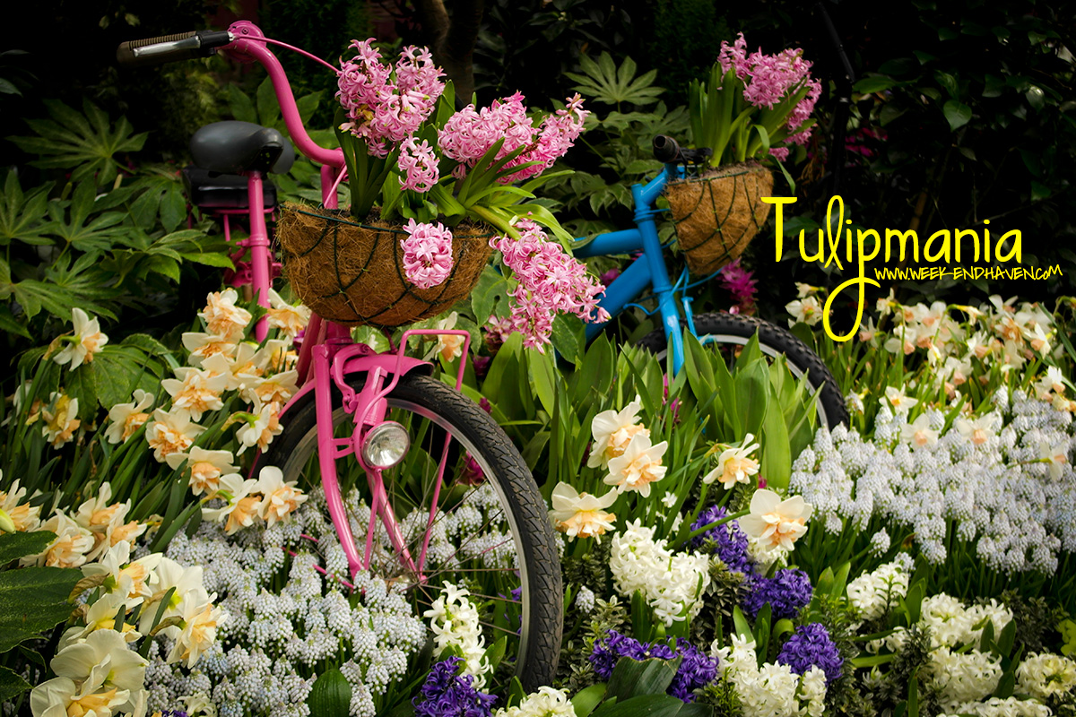 Bike pots at Gardens by the Bay