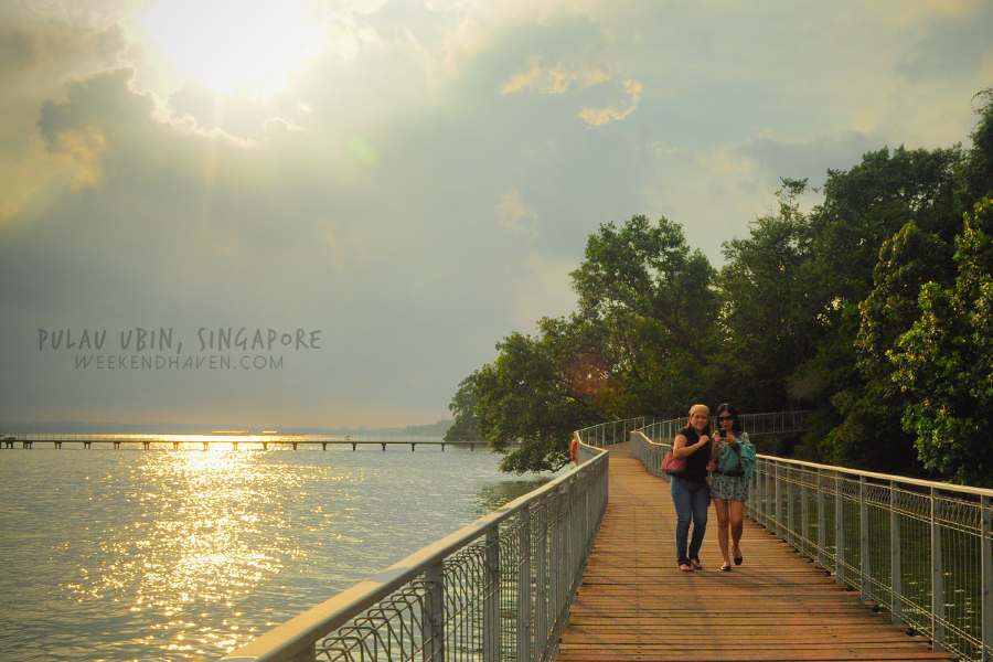 Chek Jawa Coastal Boardwalk
